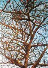 Lignes de vie - Acrylique sur toile - 70x100cm